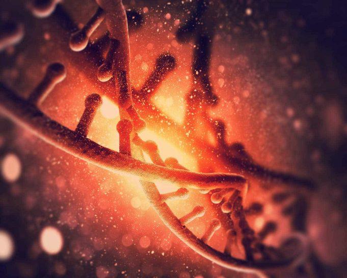 ADN-ul şi enzimele