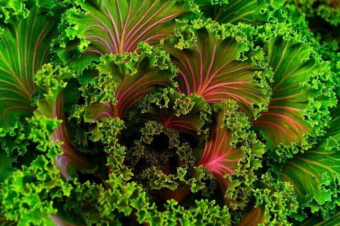 Alimentaţia, crudităţile, sănătatea – II