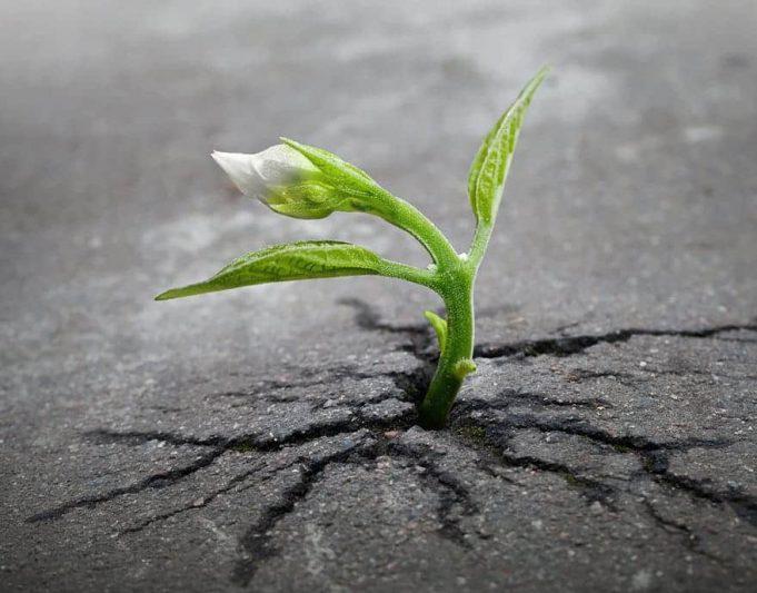 Puterea perseverenţei