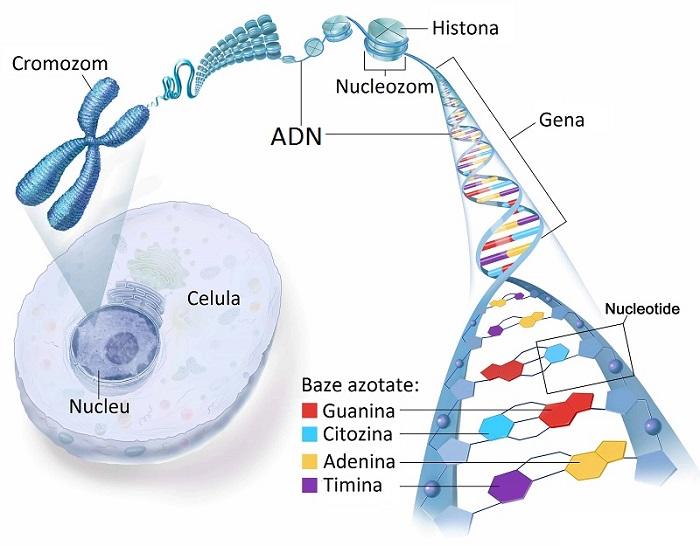 ADN-ul, un program viu