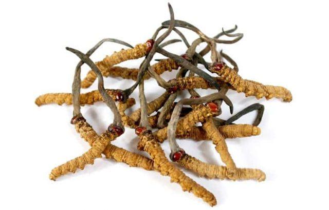 CORDYCEPS – Ciuperca Tibetană