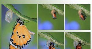 Fluturele – simbolul transformării spirituale