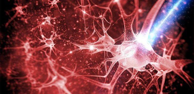Cuantele şi inteligenţa umană – II