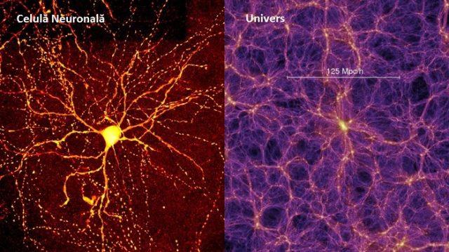 Avem oare un creier cuantic?