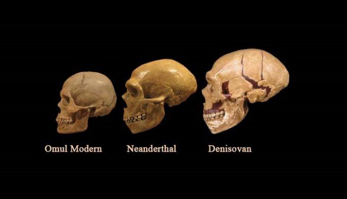 Evoluţia genetică a omenirii