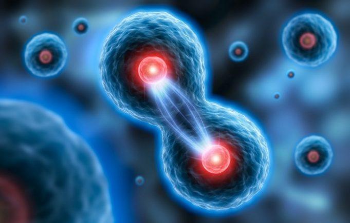 Materia vie – spiritul divide celulele?