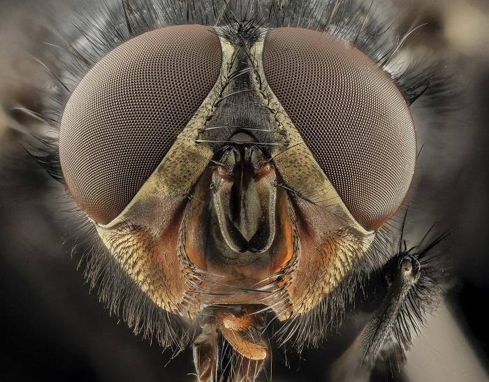 Cine se ia după muscă, ajunge la băleg